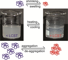 Reversible aggregation of temperature-sensitive PNIPAM microcapsules.