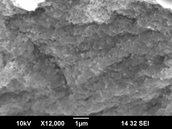SEM image of silica nanoparticles deposition on alginate particle.