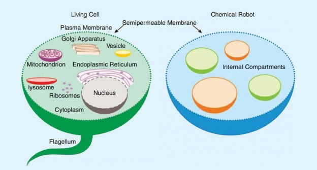 chemical composition of cells Free essay: biol 140 lab—the chemical composition of cells name _____ i) introduction all cells contain four major types of.